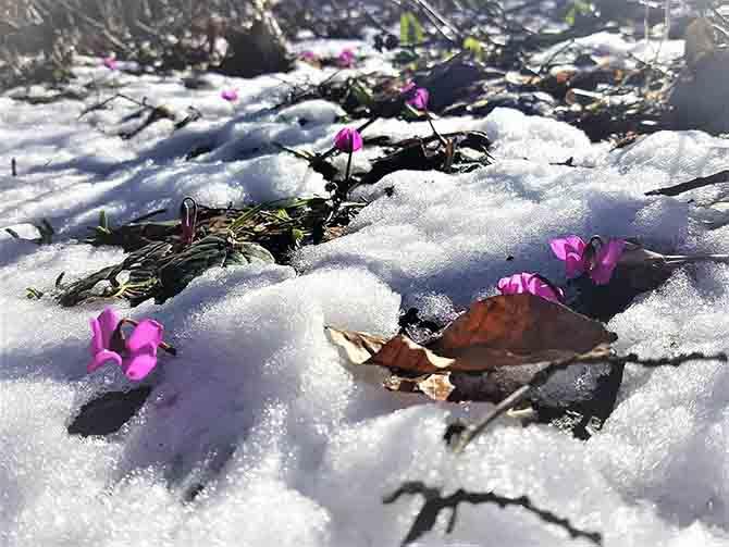 Baharın Koku suda güzelliği de bir başka güzel 4