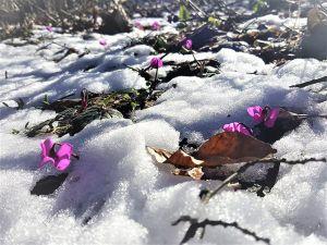 Baharın Koku suda güzelliği de bir başka güzel