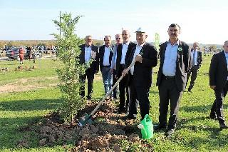 Bafra'da 5 bin fidan toprakla buluşturuldu 2