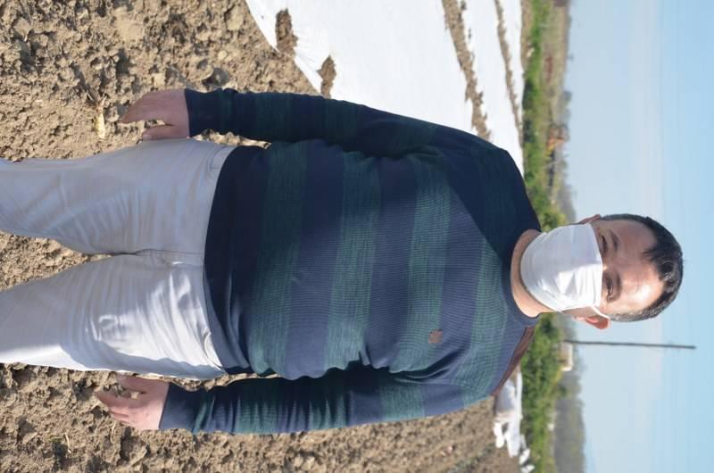 Bafra Ovası'nda örtü altı karpuz fideleri toprakla buluşuyor 22