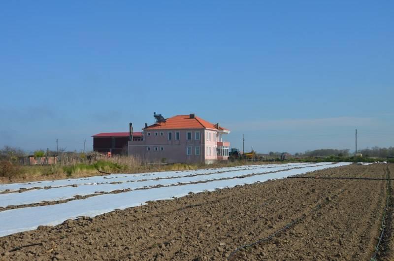 Bafra Ovası'nda örtü altı karpuz fideleri toprakla buluşuyor 29