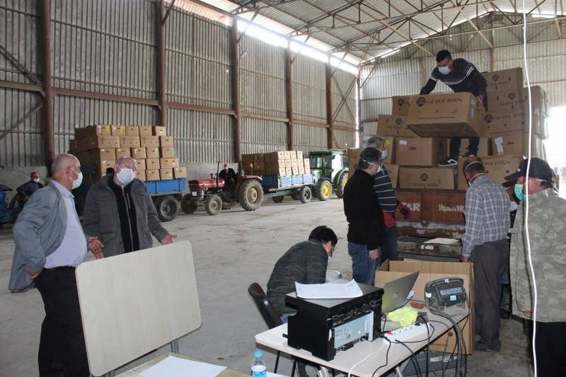 Bafra'da Tütün Alımları Başladı 15