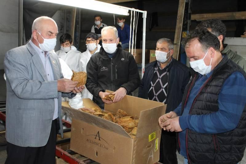 Bafra'da Tütün Alımları Başladı 5