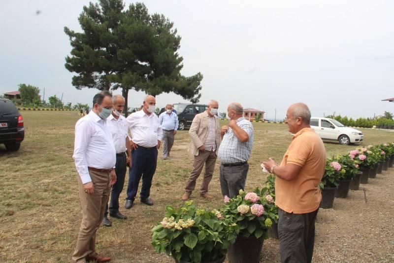 Bafra Ziraat Odası Türkiye'nin İlk Fındık Çiftliğinde İncelemelerde Bulu 1
