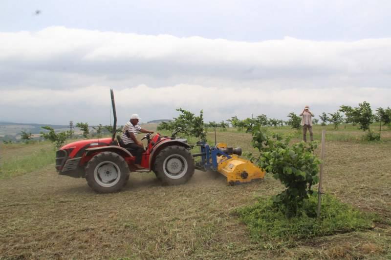 Bafra Ziraat Odası Türkiye'nin İlk Fındık Çiftliğinde İncelemelerde Bulu 10
