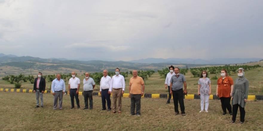 Bafra Ziraat Odası Türkiye'nin İlk Fındık Çiftliğinde İncelemelerde Bulu