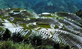Dünyanın en ilginç tarım alanları galerisi resim 1
