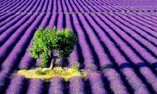 Dünyanın en ilginç tarım alanları 11