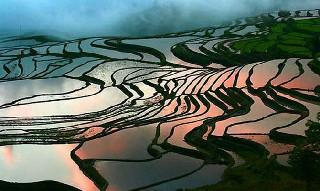 Dünyanın en ilginç tarım alanları 3