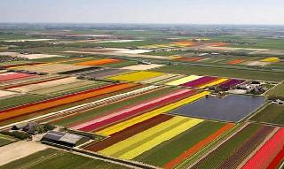 Dünyanın en ilginç tarım alanları 4