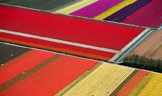 Dünyanın en ilginç tarım alanları 6