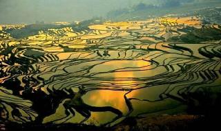Dünyanın en ilginç tarım alanları 7