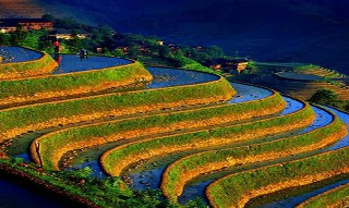 Dünyanın en ilginç tarım alanları 9