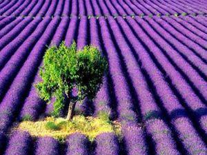 Dünyanın en ilginç tarım alanları