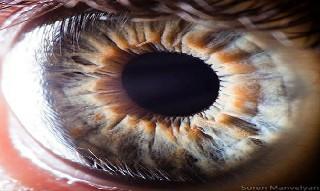 İnsan gözünün muhteşemliği 4