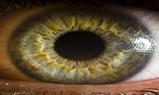 İnsan gözünün muhteşemliği 6