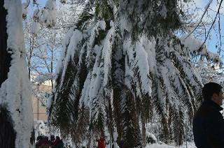 Bafra'dan kar manzaraları 6
