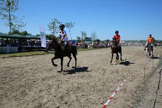 Samsun'da Rahvan At Yarışları 4