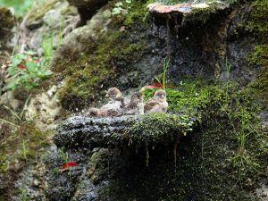 Serçeler Banyo yapıyor