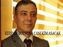 ADNAN HAZIR YAZDI