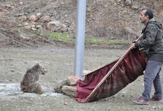 Suya düşen yavru ayıyı vatandaşlar kurtardı