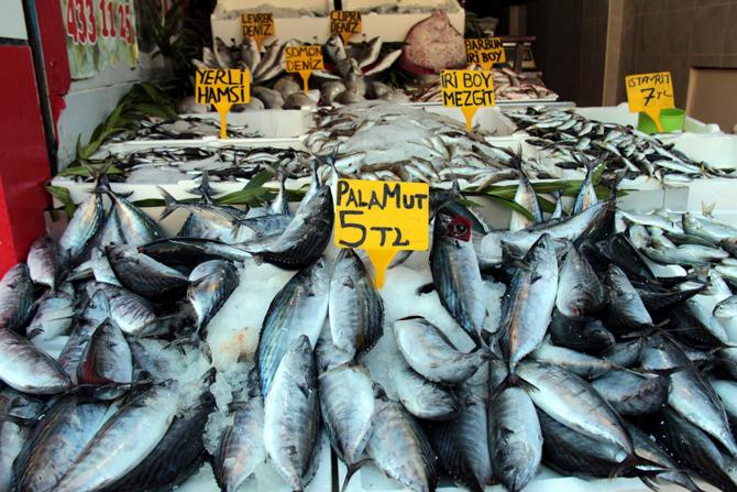 Kurban Balıkları vurdu