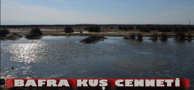 Bafra Kızılırmak Deltası Kuş Cenneti