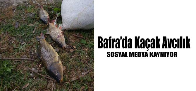 Bafra'da Kaçak Avcılık