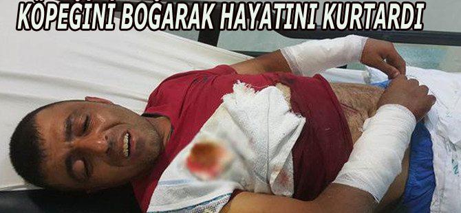 Kendisine saldıran köpeğini boğarak öldürdü
