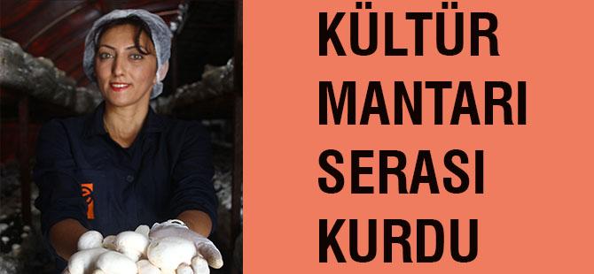 Kültür mantarı serası kurdu