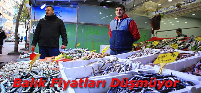 Balık Fiyatları Düşmüyor
