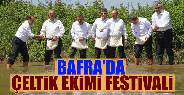 Bafra'da Çeltik Ekimi Festivali