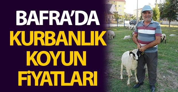 Bafra'da Kurbanlık Koyun Fiyatları