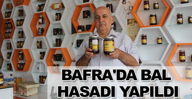 Bafra'da Bal Hasadı Yapıldı
