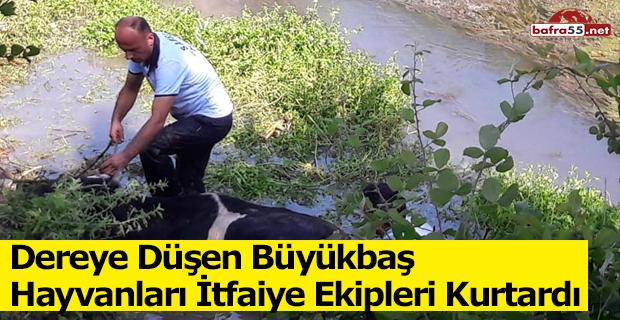 Dereye Düşen Büyükbaş Hayvanları İtfaiye Ekipleri Kurtardı