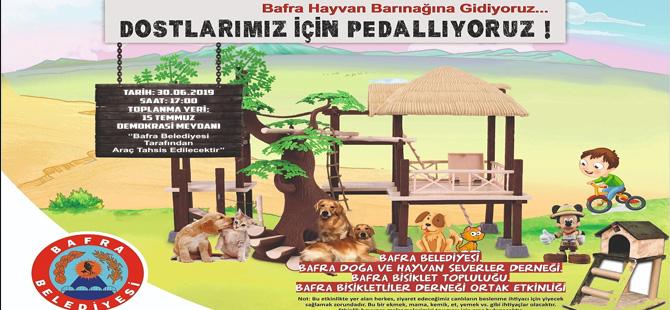 Sokak Hayvanları İçin Pedal Çevirecekler