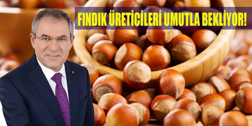 FINDIK ÜRETİCİLERİ UMUTLA BEKLİYOR!