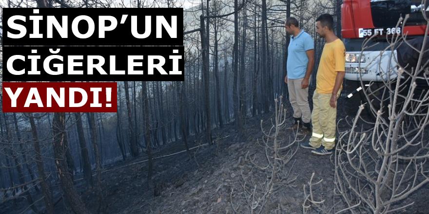 Sinop'un Ciğerleri Yandı!