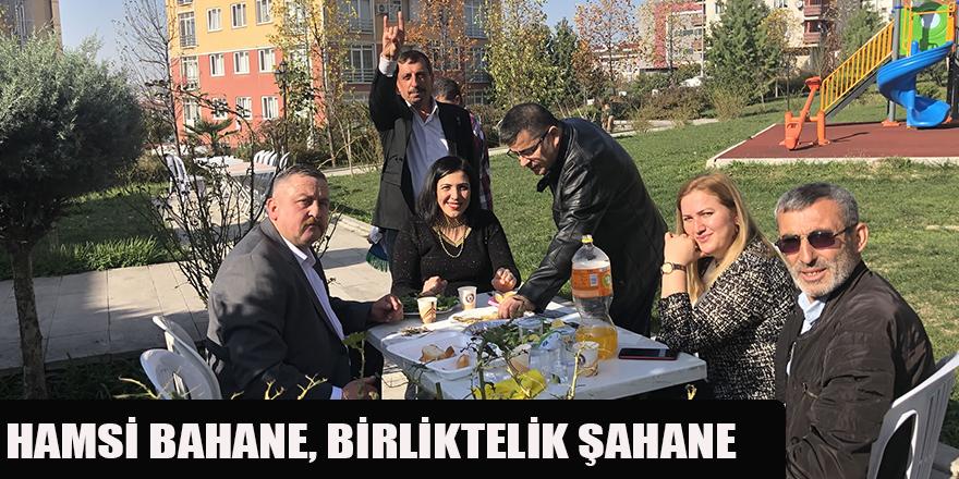 HAMSİ BAHANE, BİRLİKTELİK ŞAHANE