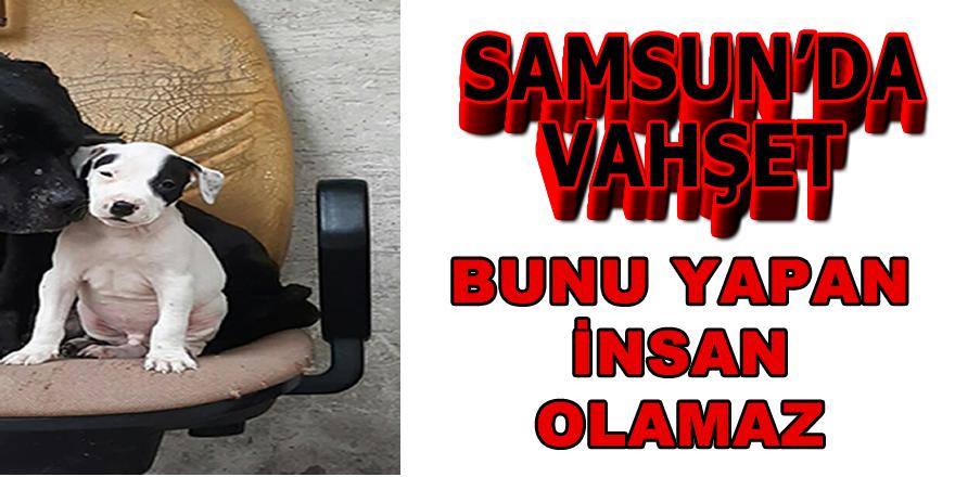 Samsun 'da Vahşet
