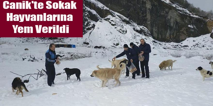 Canik'te Sokak Hayvanlarına Yem Verildi