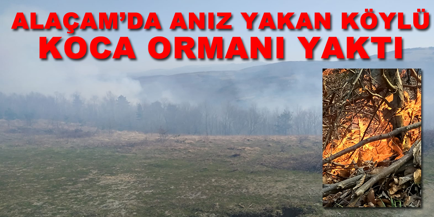 Anız Yangını Ormana Sıçradı