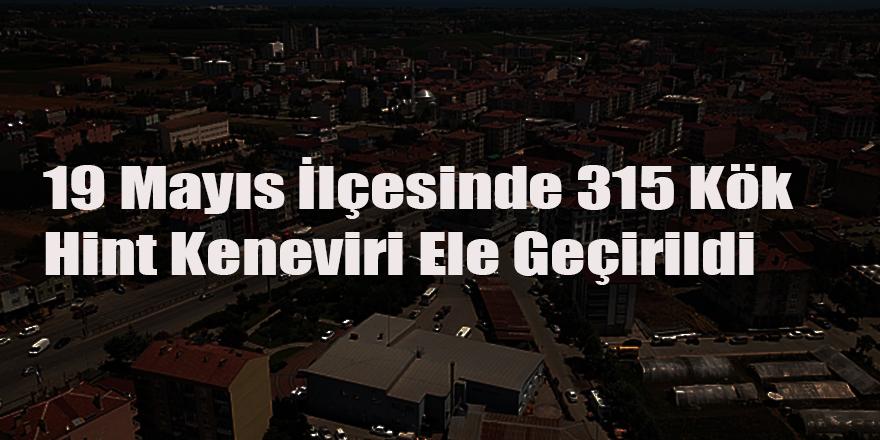 19 Mayıs İlçesinde 315 Kök Hint Keneviri Ele Geçirildi