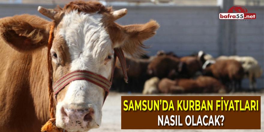Samsun'da Kurban Fiyatları Nasıl Olacak?