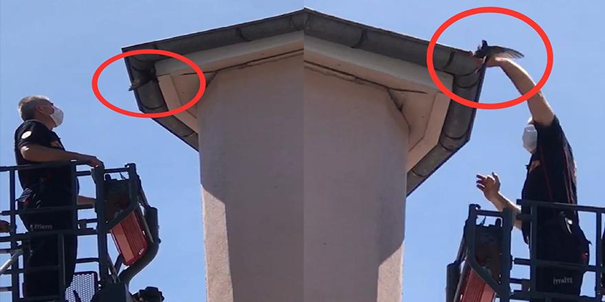 İtfaiye Ekipleri Bu Kez Kırlangıçlar İçin Çatıya Çıktı