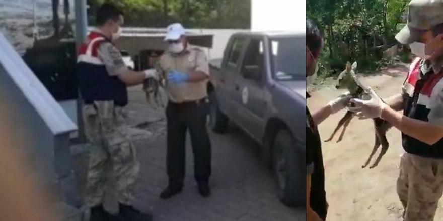 Yavru Karacayı Jandarmaya Teslim Etti