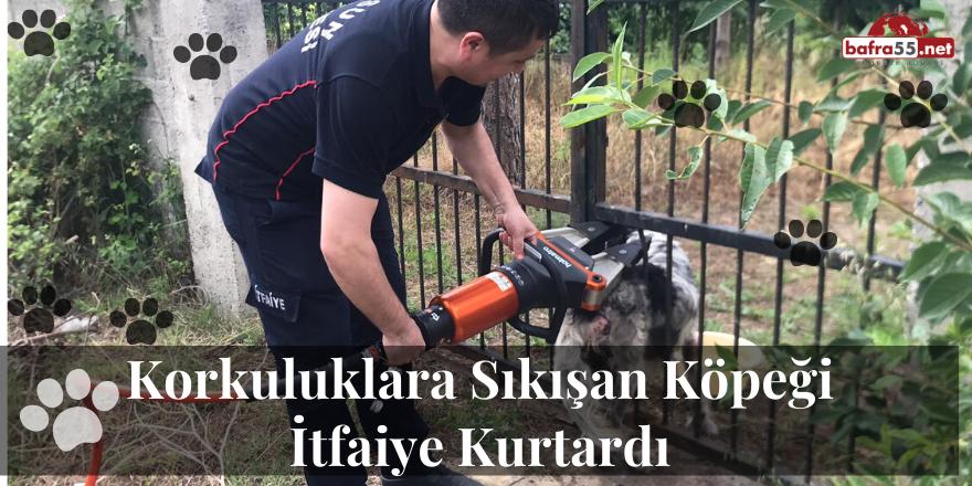 Korkuluklara Sıkışan Köpeği İtfaiye Kurtardı