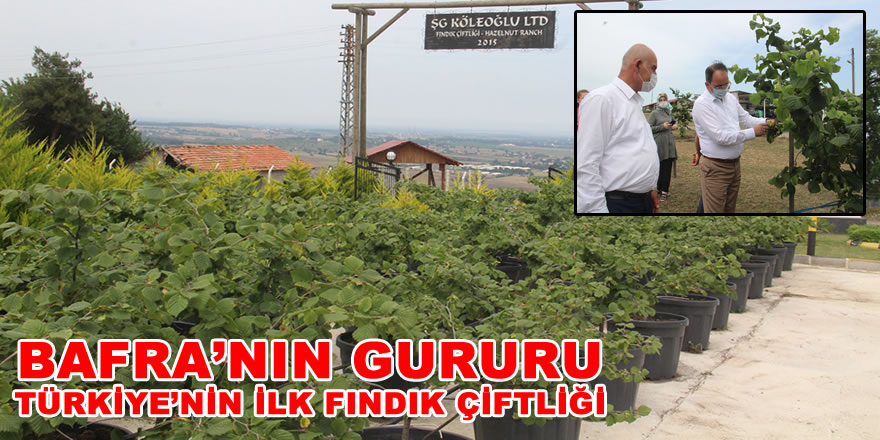 Kaymakam Ertürkmen, Başkan Tosuner , Türkiye'nin İlk Fındık Çiftliğine Tam Not Verdiler