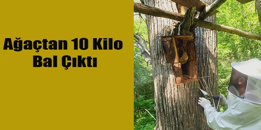 Ağaçtan 10 Kilo Bal Çıktı