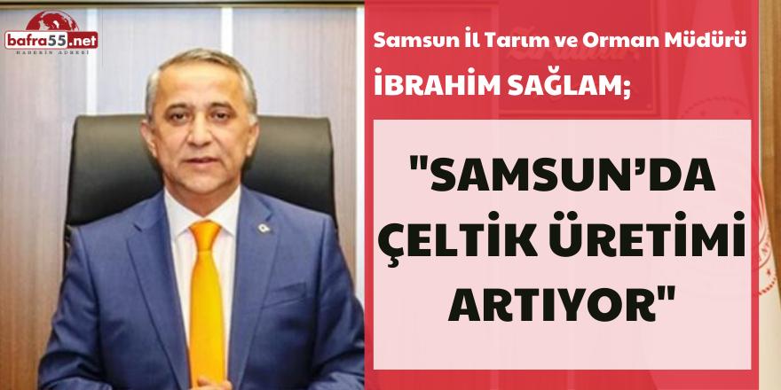 Samsun'da Çeltik Üretimi Artıyor